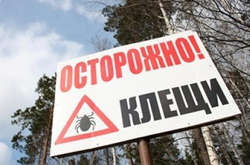 700 жителей губернии пострадали от клещей
