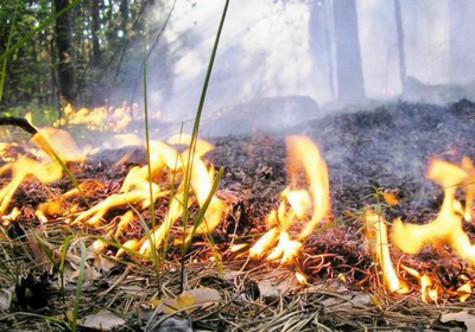 В тольяттинском лесу ликвидировали низовой пожар