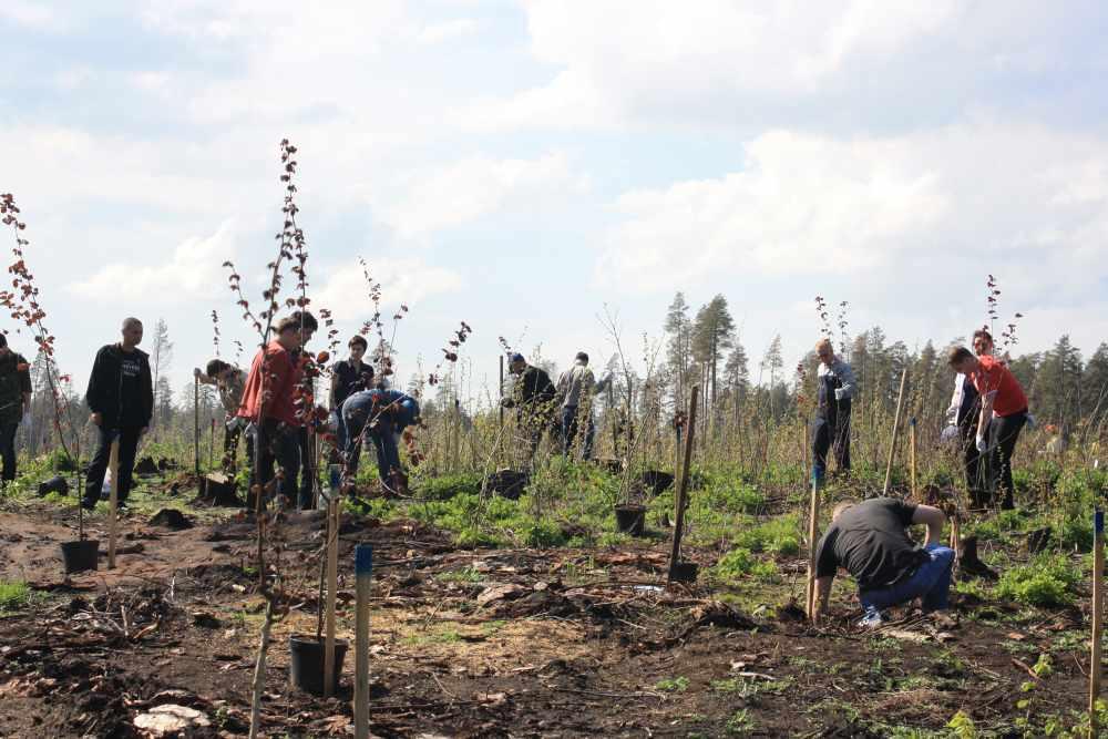В это воскресенье тольяттинцы, дружно засучив рукава, возьмутся за восстановление леса