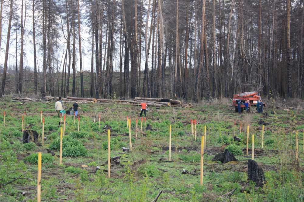 Тольяттинские волонтеры посадят деревья в память о павших на войне