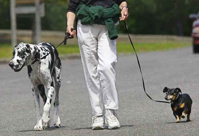 В Тольятти благоустроят особую площадку для выгула собак