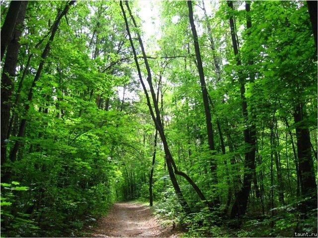 В Самарской области введет запрет на пребывание в лесах