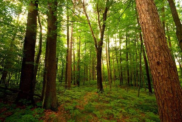 Прокуратура: Запрет на посещение лесов в Тольятти незаконен