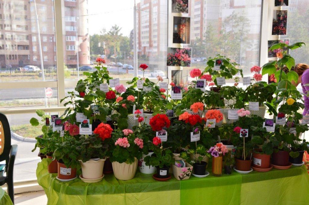 В эти выходные Тольятти в очередной раз соберет любителей цветов