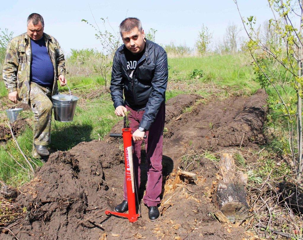 Мэрия Тольятти планирует полноценно взяться за восстановление и благоустройство зеленой зоны города