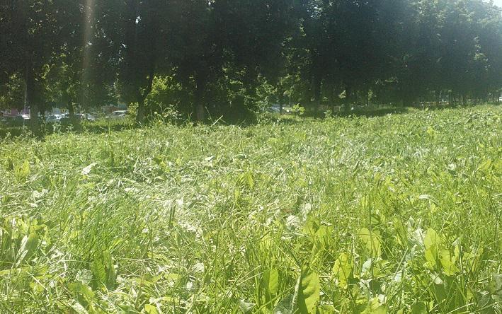 В Тольятти избавляются от лишней травы