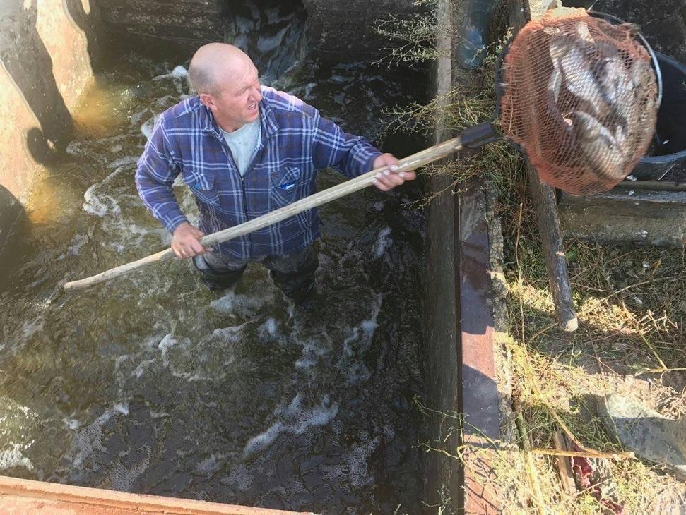 В Куйбышевское водохранилище выпущено двадцать шесть тысяч мальков