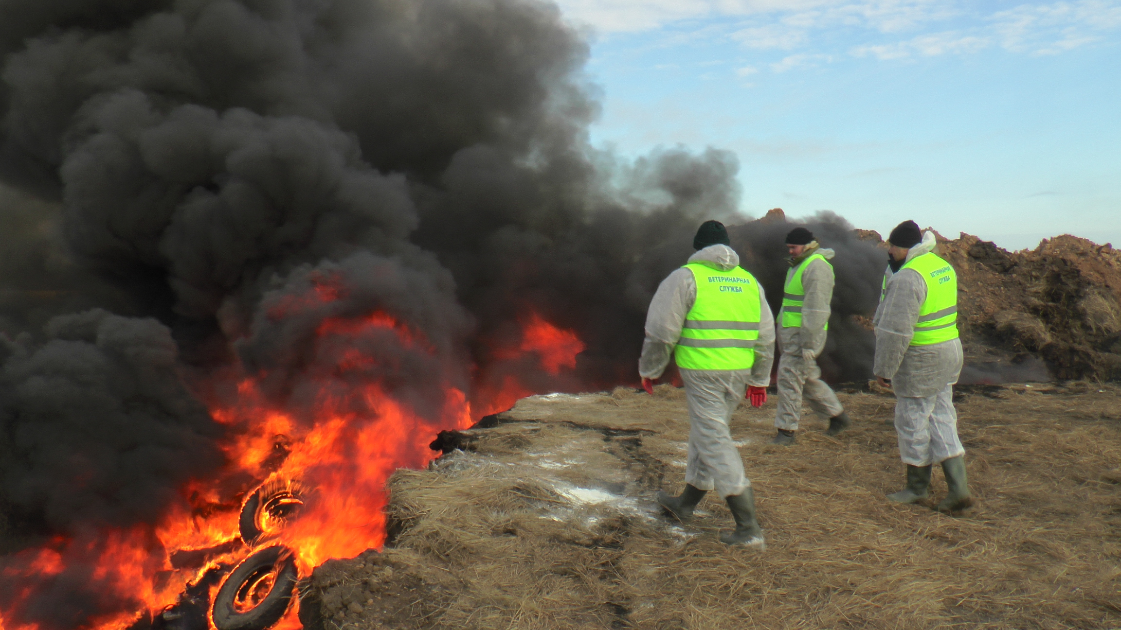 ВСамарской области свертолета искали трупы павших отчумы кабанов