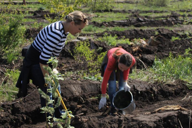 В тольяттинском лесу высадят молодые деревья
