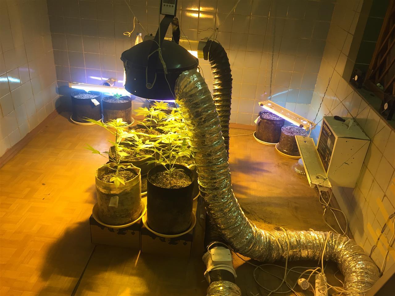 Вытяжка из марихуаны переработка конопли в марихуану