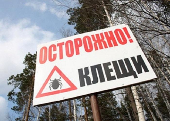 Больше граждан Омской области становятся жертвами клещей