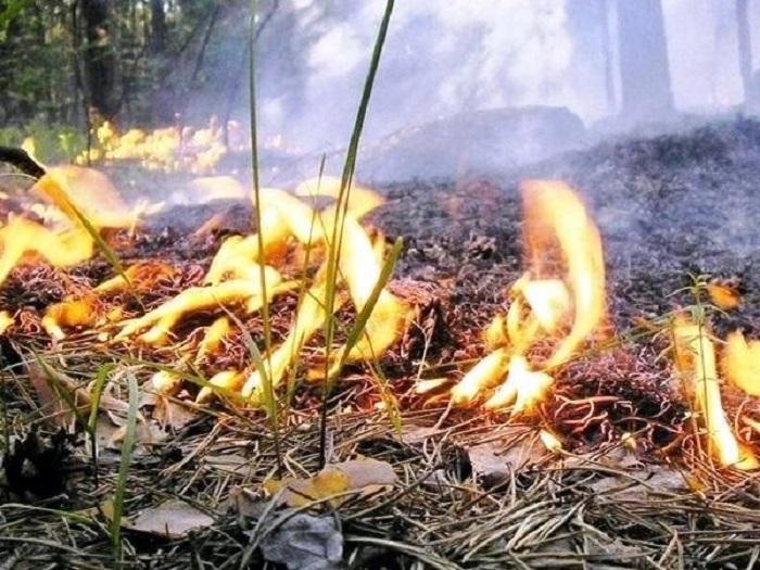 Более 120 пожарных тушили лес вблизи Тольятти