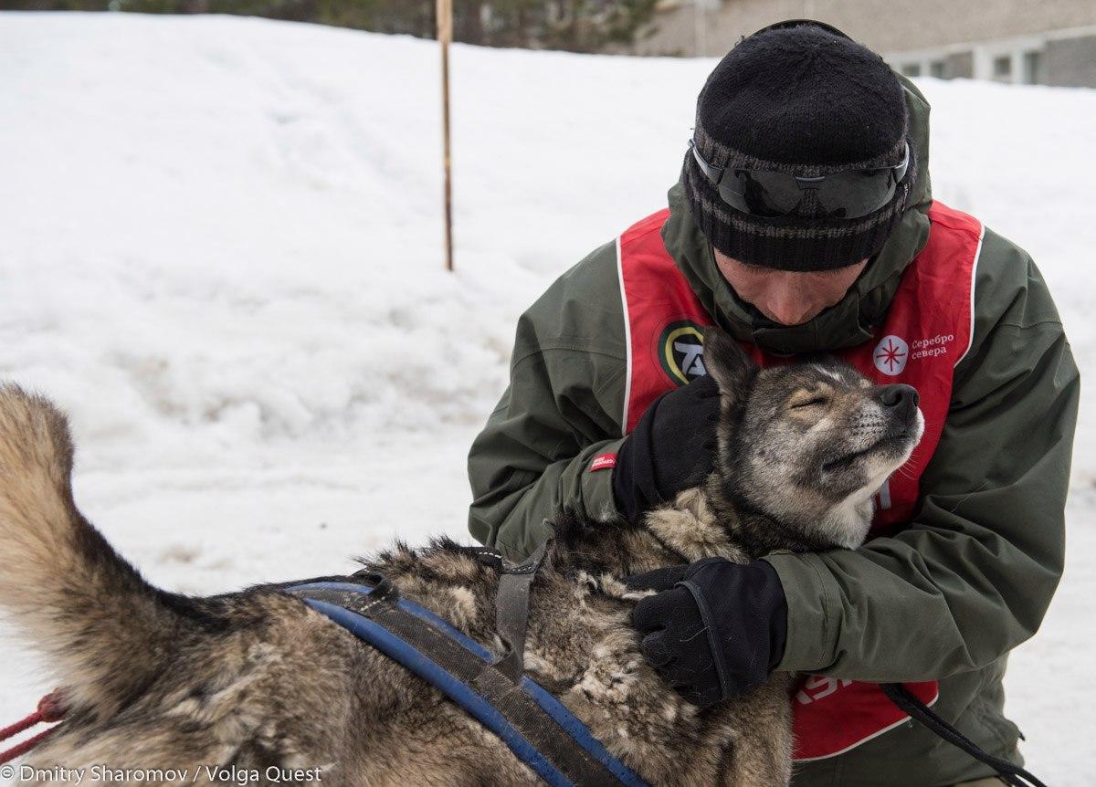 Тольяттинцам покажут фотовыставку «Волга Квест: люди и собаки»