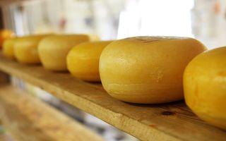 В Самарской области пытаются запретить сайты, продающие санкционный сыр
