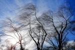 Тольяттинцев предупредили об очень сильном ветре