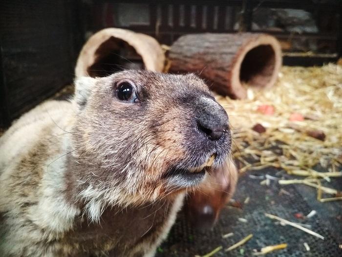В Самарском зоопарке сурки предсказали наступление ранней весны