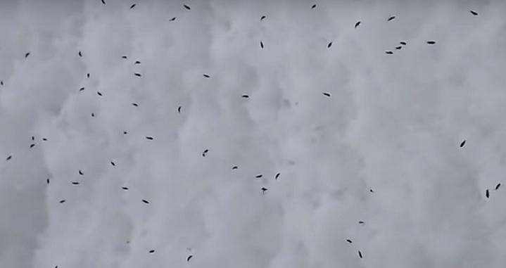 В Самарской области выпал снег с живыми насекомыми