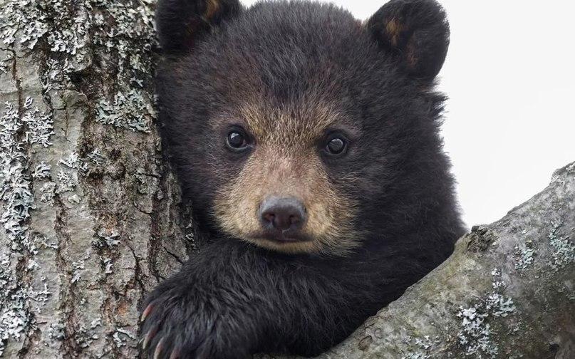 Активисты и прокуратура спасли из тольяттинского кафе медведицу и медвежонка