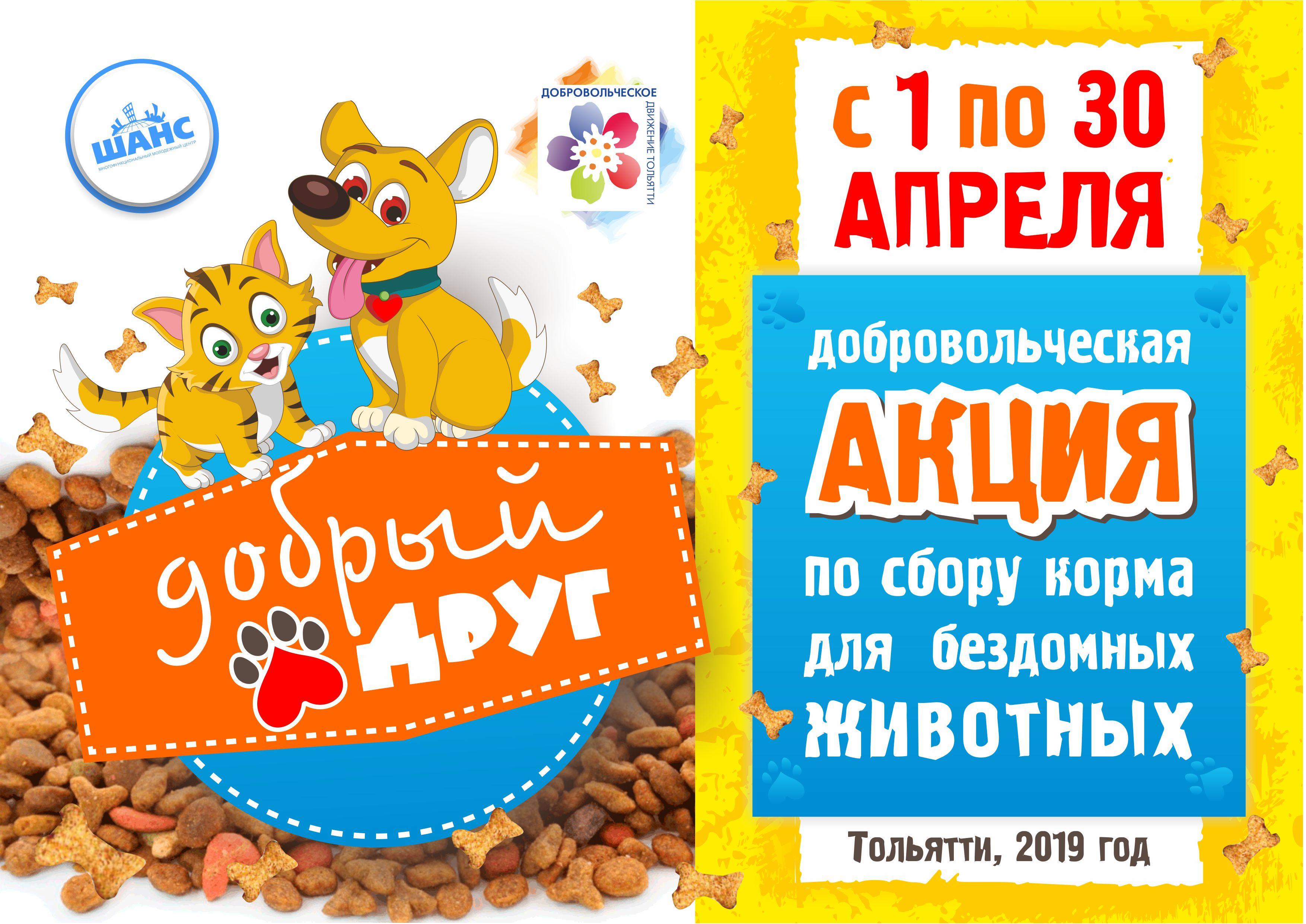 Давай вместе поможем: В Тольятти стартует акция по сбору корма для бездомных животных