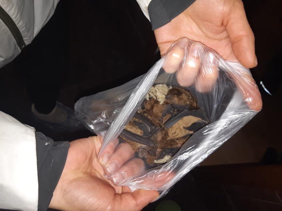 Школьник приютил двести летучих мышей, найденных на помойке