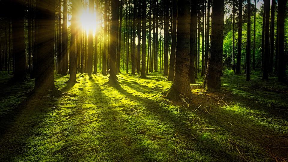 В Тольятти пройдет агломерационный фестиваль «День Земли: Лес Знаний»