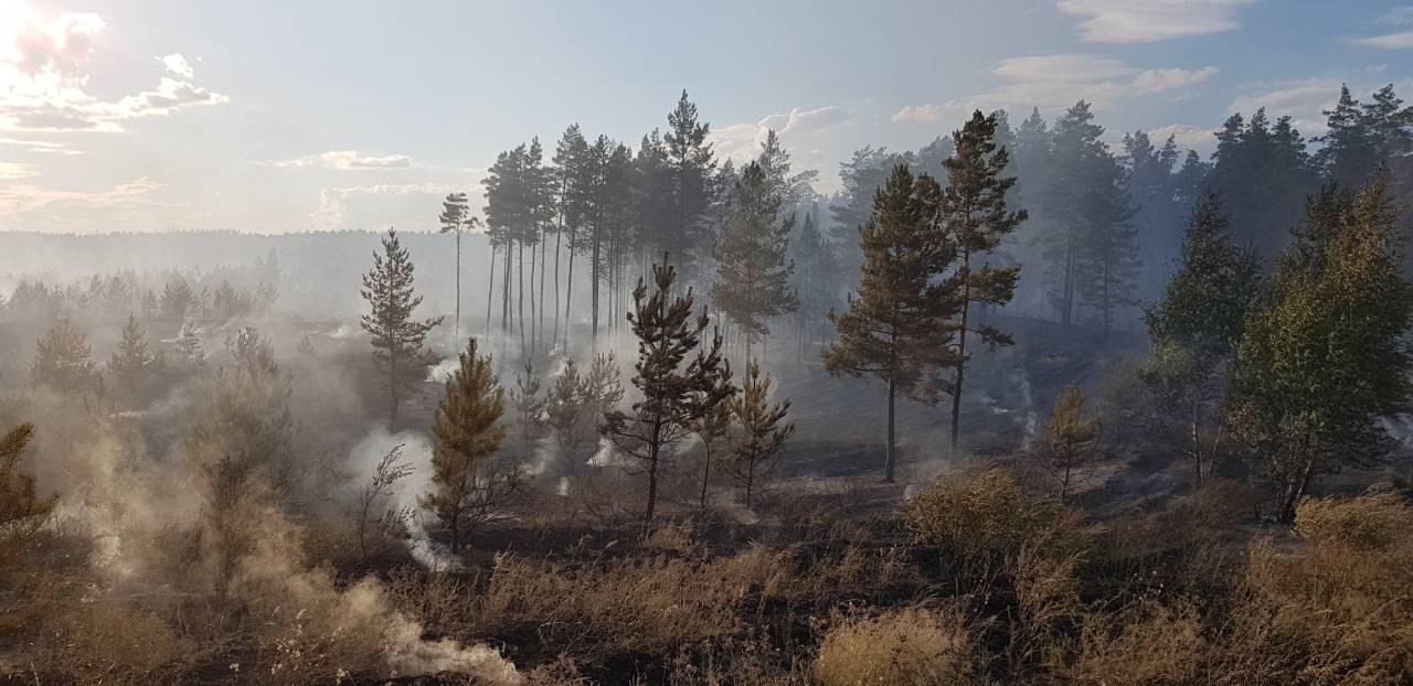 В Тольятти сорвались торги по восстановлению городских лесов