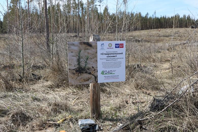 В Тольятти открыт весенний сезон восстановления леса!