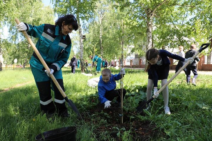 В Тольятти высадили березовую экоаллею