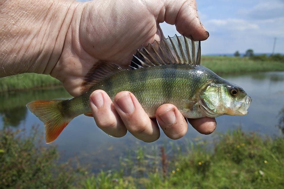 В Тольятти 116 кг рыбы вернули в естественную среду обитания