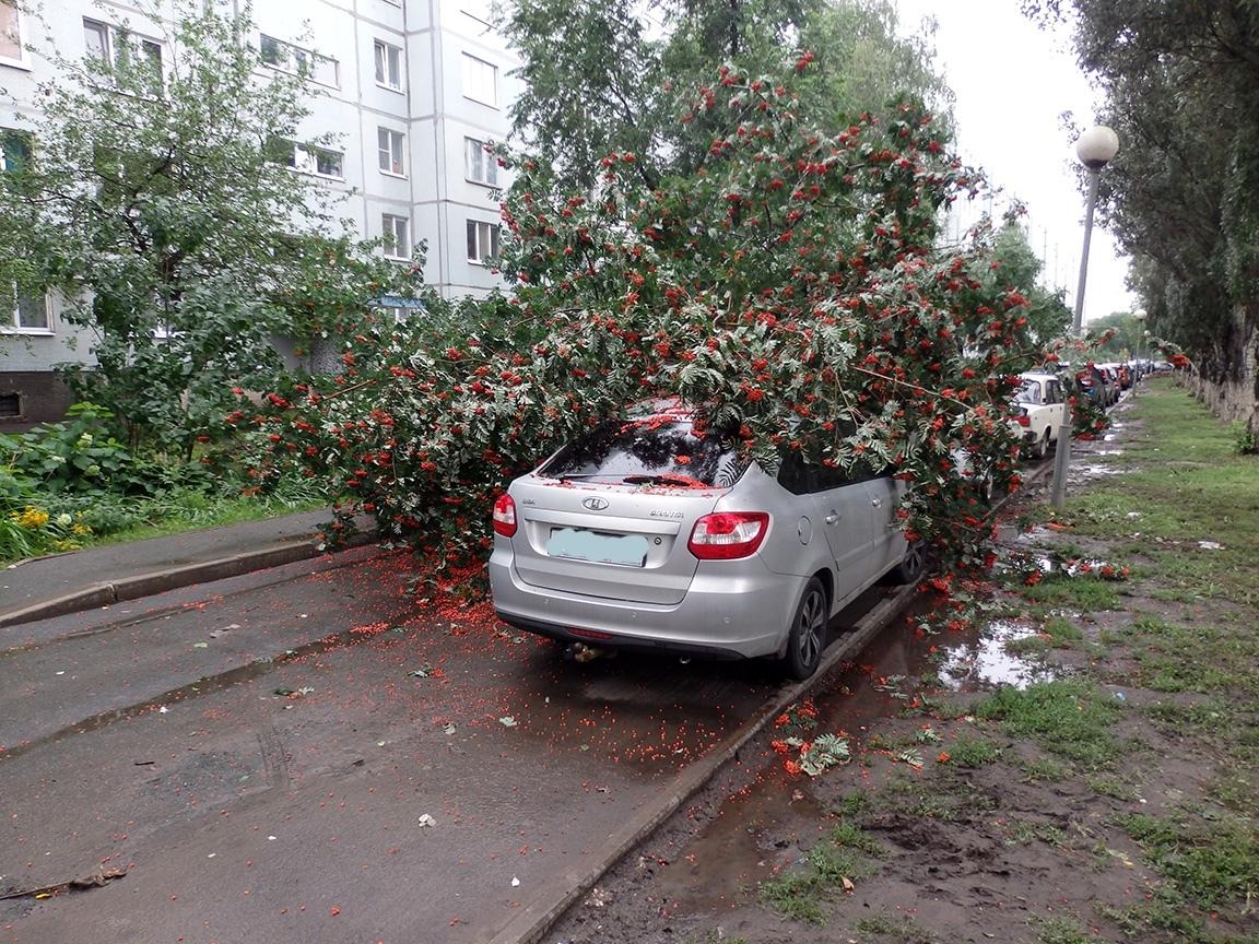 Деревья падают, стены текут, подъезды топит: Как Тольятти пережил удар стихии