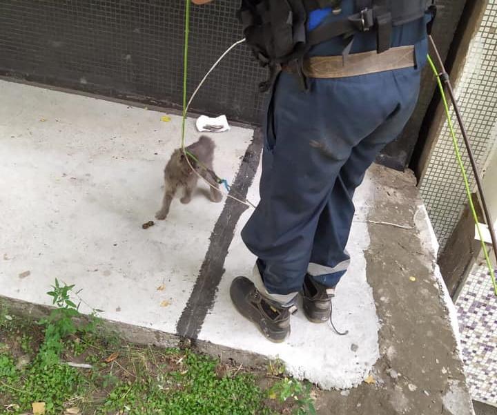 В Тольятти кошка застряла в температурном шве многоквартирного дома