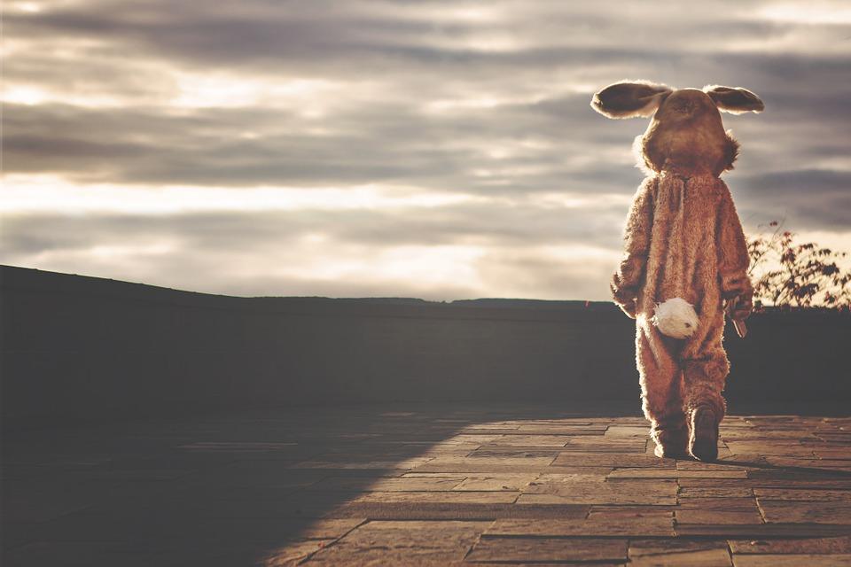 В Тольятти злоумышленник в костюме зайца ограбил два офиса микрокредитных огранизаций