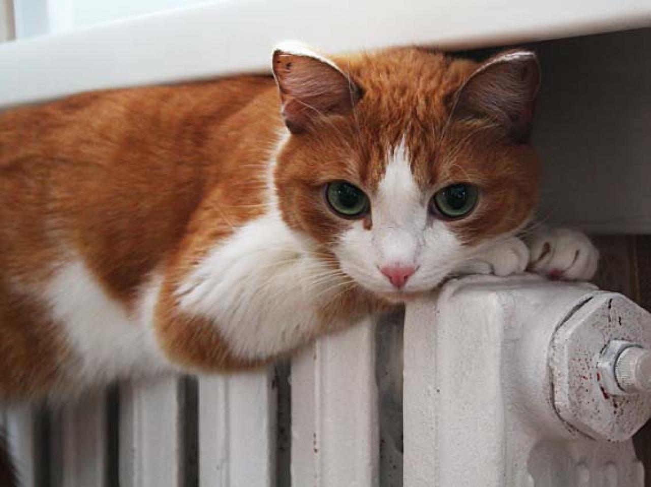 Более 1/3 домов в Тольятти обеспечены теплом