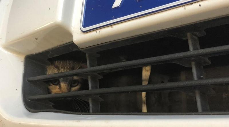Под Тольятти полицейские и автомеханики спасали жизнь котенку