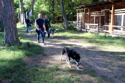 Депутаты поддержат уникальный питомник ездовых собак в Тольятти