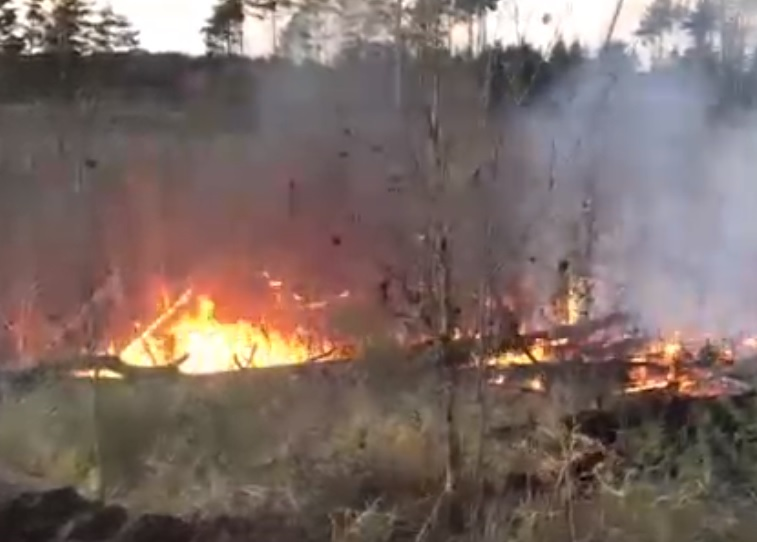 Внимание! Лес Тольятти продолжает гореть. Жителей зовут на помощь