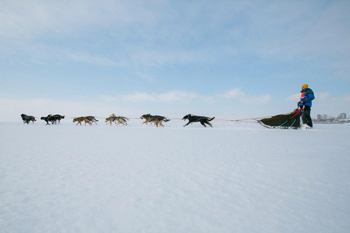 ВОЛГА КВЕСТ вернулась и вошла в мировую серию Arctic World Series