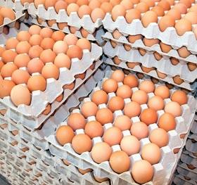 В Тольятти выявили 300 тысяч подозрительных яиц