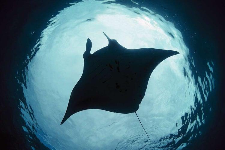 В самарском океанариуме будут обитать 4 тысячи животных
