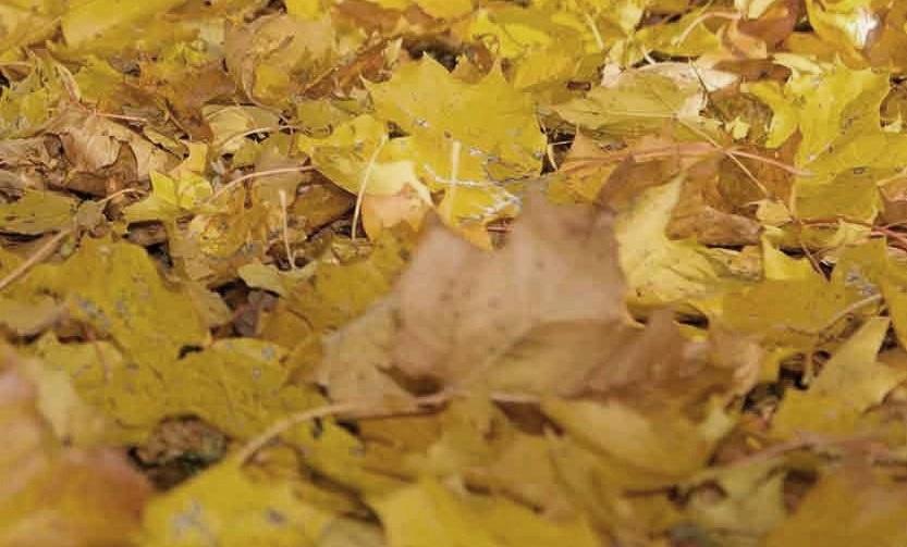 Осень в России наступит в середине сентября