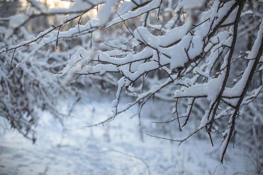 Синоптики рассказали, когда в Самарской области пойдет снег