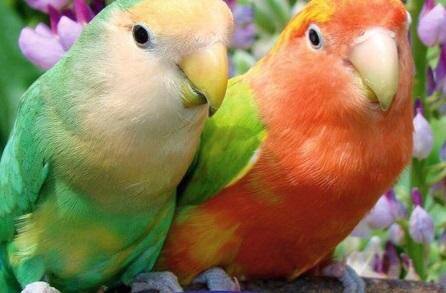 Выходные в Тольятти: уникальная выставка птиц, актуальное искусство и новое кино