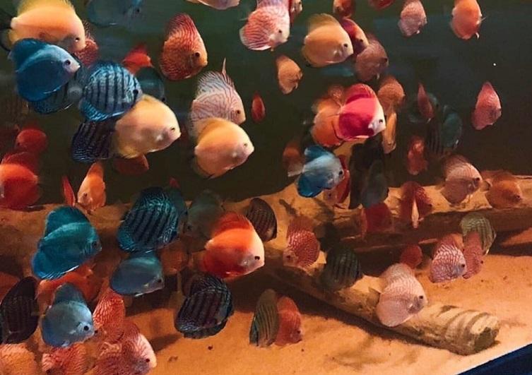 В Самаре открыли крупнейший океанариум в Поволжье