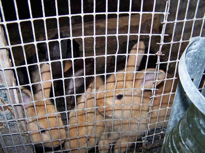 В России контактные зоопарки пытаются подстроиться под новый закон