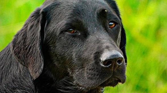 Разрешение отстреливать собак в Самарской области проверят прокуратура и МВД