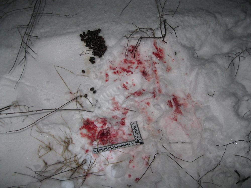 В Самарской области поймали браконьера, убившего лосиху