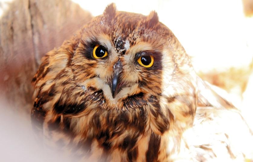 В Тольятти горожан призывают помочь уникальному приюту для птиц