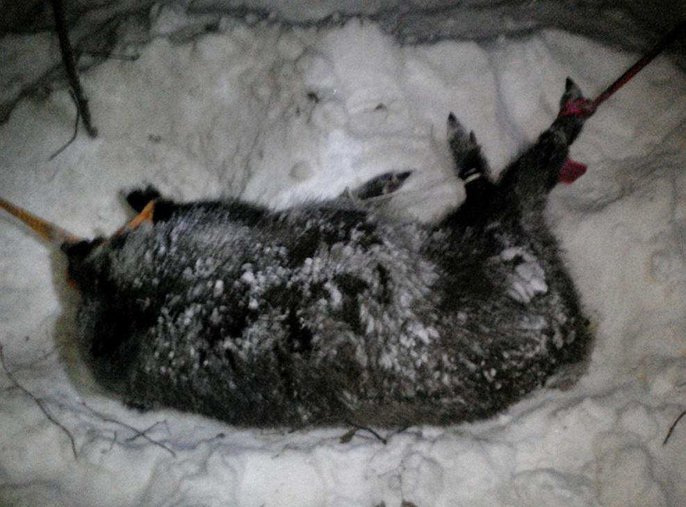 «В связи с отсутствием преступления»: Дело о браконьерстве в «Самарской Луке» пытались снова прекратить