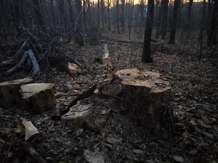 Властей заставят очистить тольяттинские леса