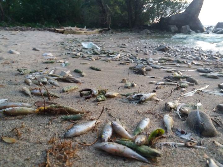 Из-за теплой зимы в России может сократиться популяция речной рыбы
